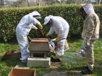 The bees move into their new home