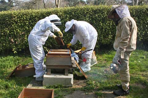 New Bees at La Seigneurie