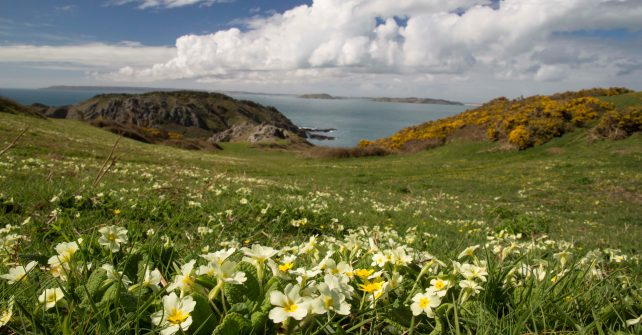 Sark Tourism's On-line Survey