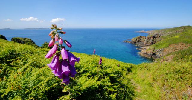 Guided Walks on Sark June to October 2017