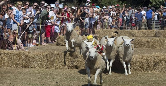 Sheep Racing & Carnival Weekend