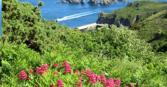 Route 1 – Harbour Hill – East Coast Path – Light House Viewing Point